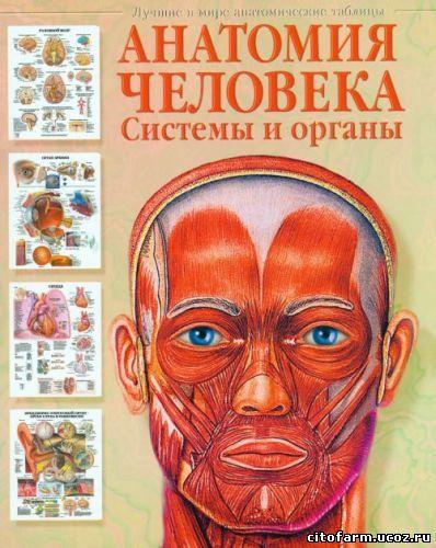 анатомия человека скачать